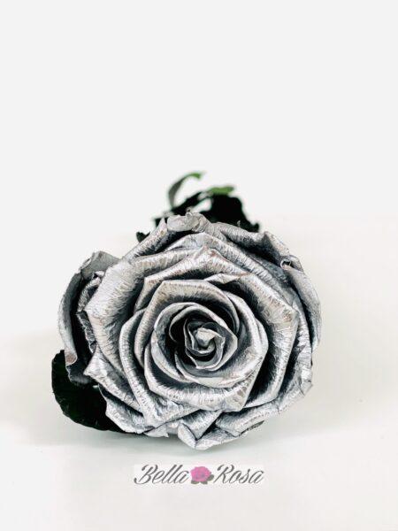 Rosa eterna liofilizada  plata