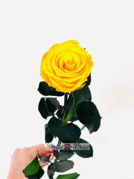 Rosa eterna liofilizada amarilla