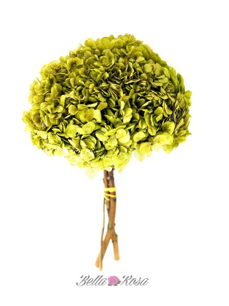 hortensia preservada verde